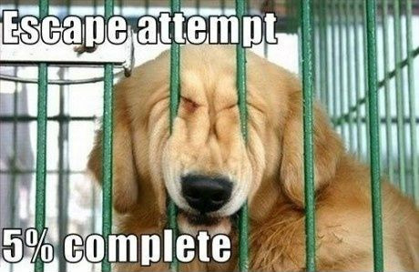 Funny Dog Meme Images : Let me out of here! humordog funny dog pictures funny dog memes